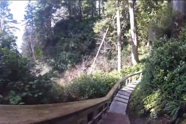 Wooden stairs curve into forest below
